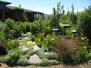 Native plant garden