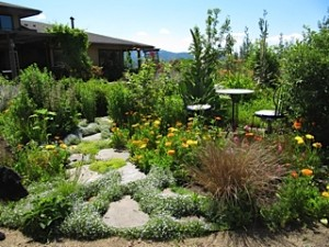 Medicinal plant and vegetable gardens in the backyard