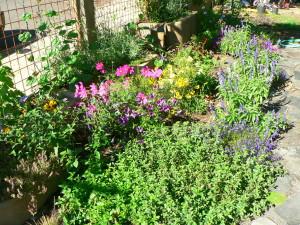 Medicinal Plant Garden After