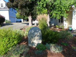 Native plant drought tolerant landscape