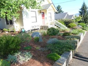 Native plant garden 2