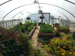 60x25 year round production greenhouse