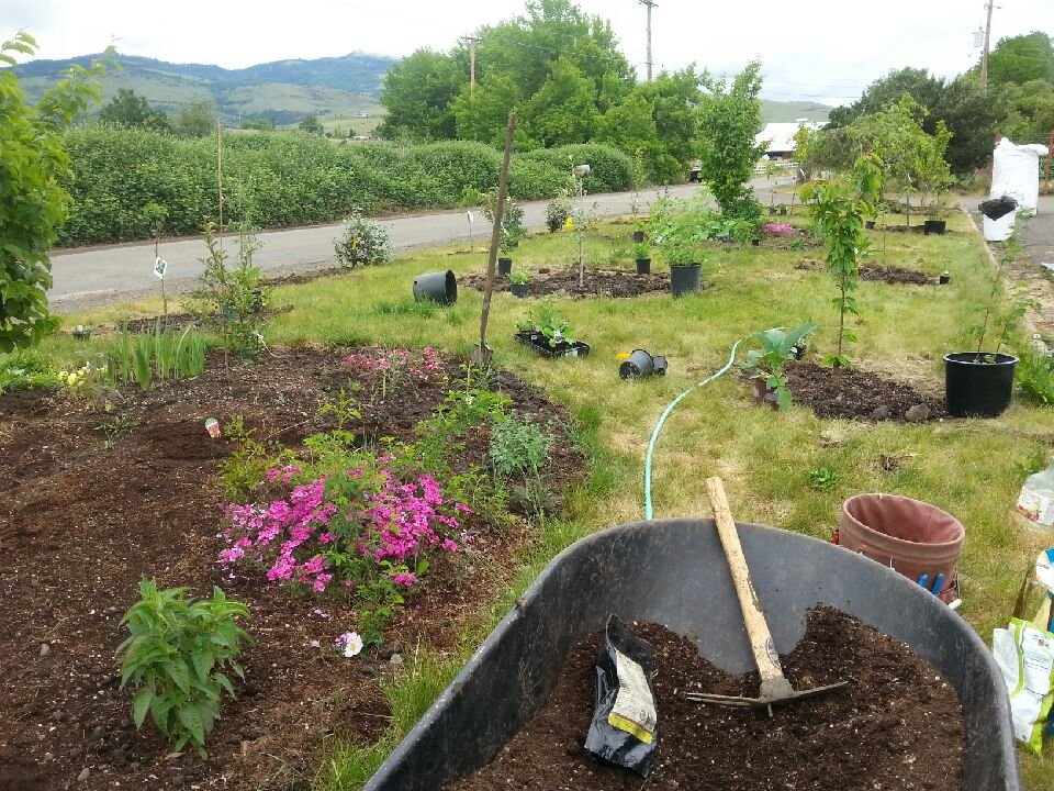 Food Forest Sacred Earth Design Orchard Fruit Garden Ecology