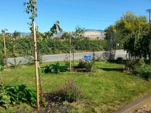 Fruit tree guilds