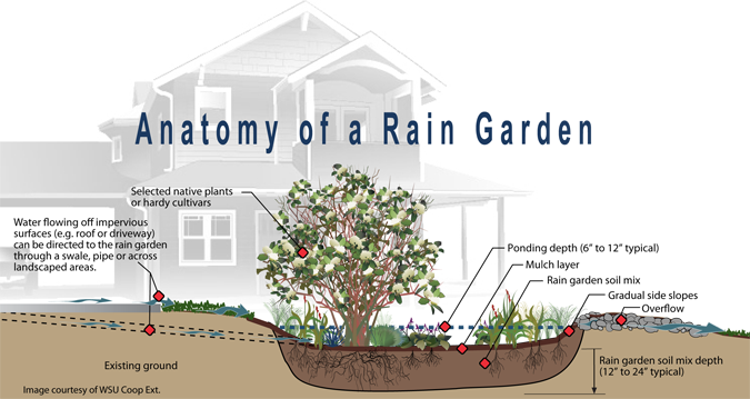 Rain garden elements